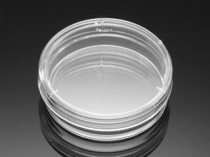 Corning® BioCoat™ Poly-L-Lysine Culture Dishes